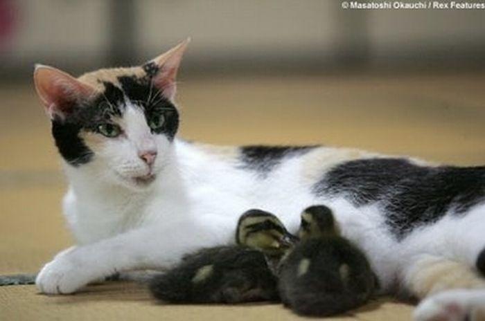Ніжна дружба різних тварин (62 фото)