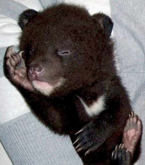 Ведмідь і ведмежатко (4 фото)