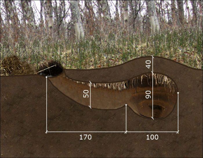 Ведмежа барліг (3 фото)