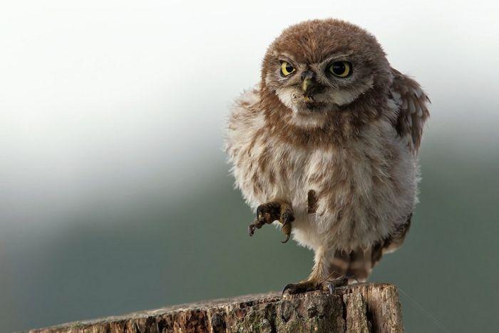 Птахи (100 фото)