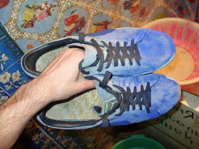 Щеня «блакитних кровей» (7 фото)