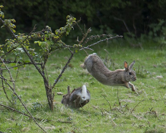 Стрибали зайчики (21 фото)