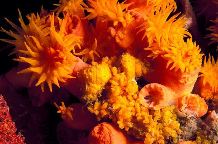 Морські майстра камуфляжу (17 фото)
