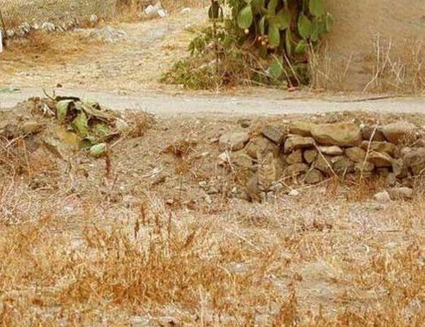 Загадка дня. Ви бачите кота? (5 фото)
