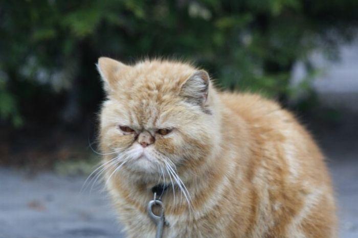 Креативний кіт з металобрухту (7 фото)
