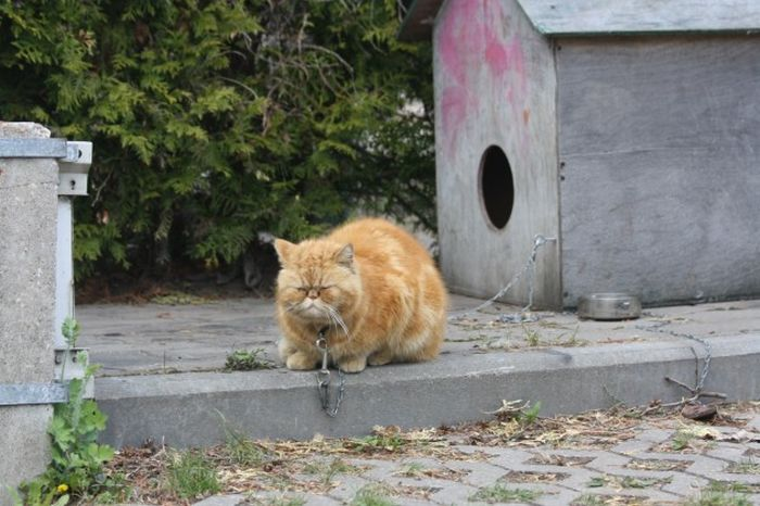 Небезпечний кіт (8 фото)