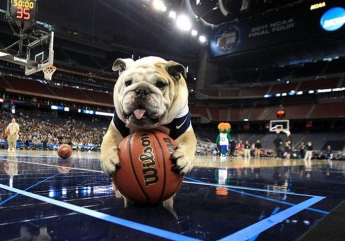 Чарівний талісман баскетбольної команди (30 фото)