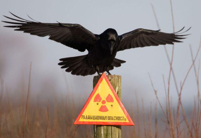 Чорнобиль – 25 років потому (50 фото)