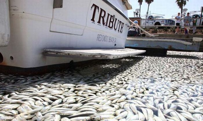 Масова загибель риби (16 фото)