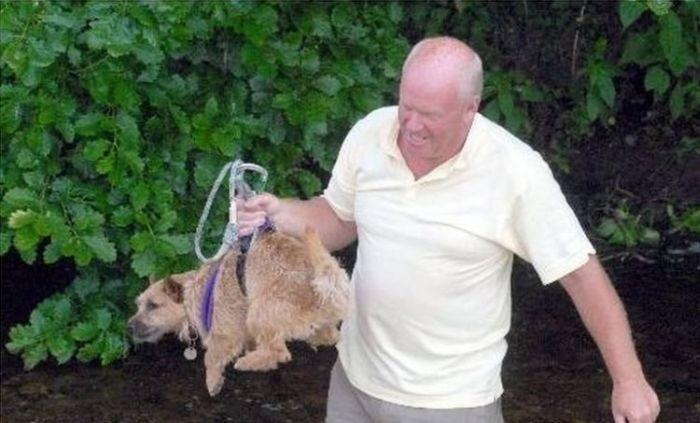 Порятунок нещасної собаки (6 Фото)