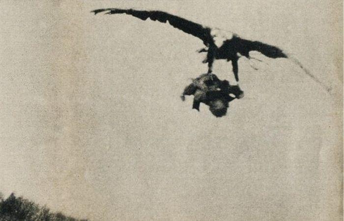 Орел і дитина (3 фото)