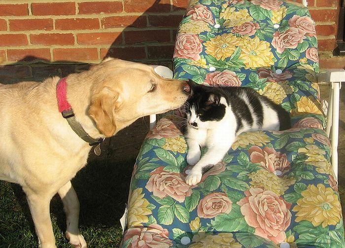 Забавні переговори котів і собак (16 фото)