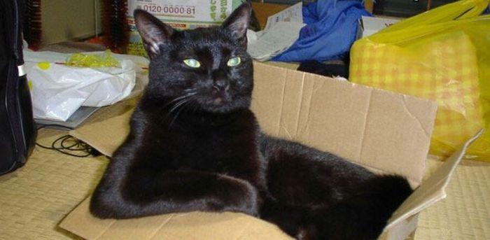 Смішні і безглузді пози котів (47 фото)