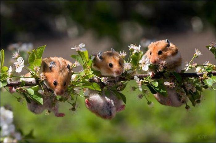 Хомячки і квіти (16 фото)