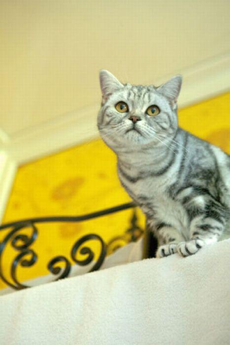 Пятизірковий готель для кішок (29 фото)