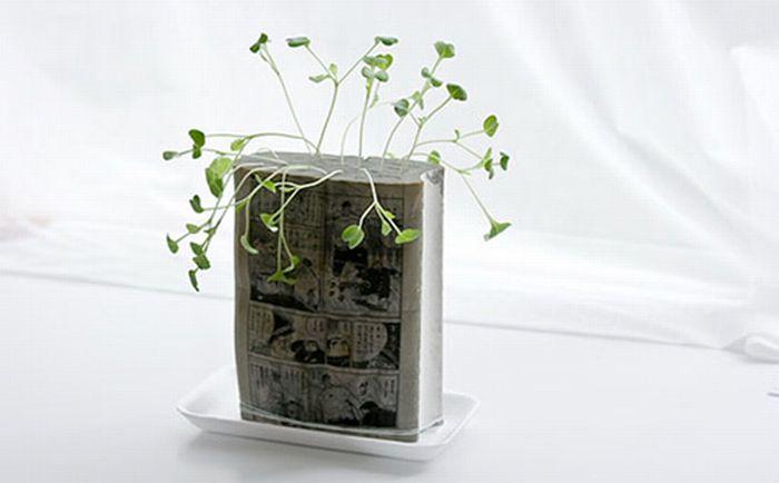 Незвичайний вазон для квітки (7 фото)