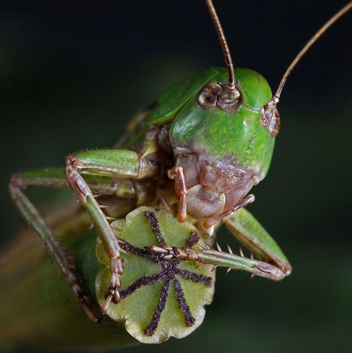 Комахи (142 фото)