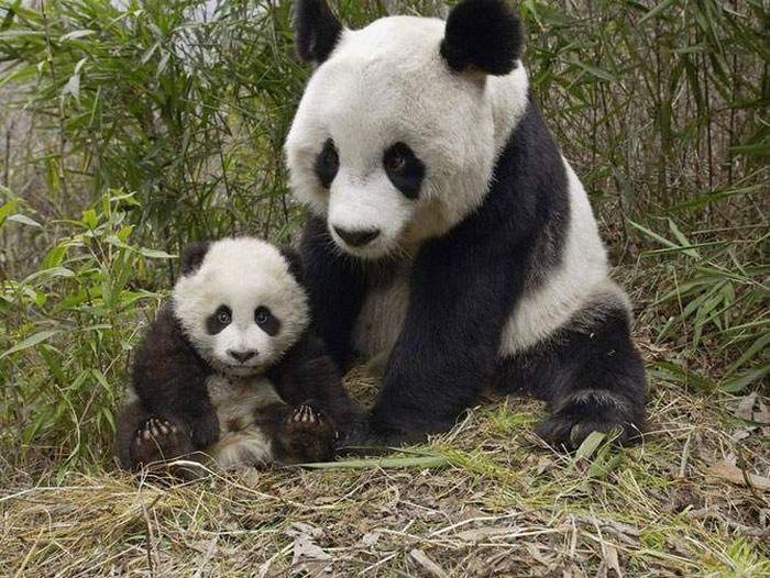 Мами і діти (14 фото)