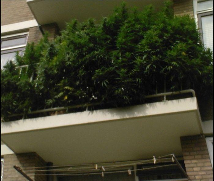 Тільки в Голландії (2 фото)