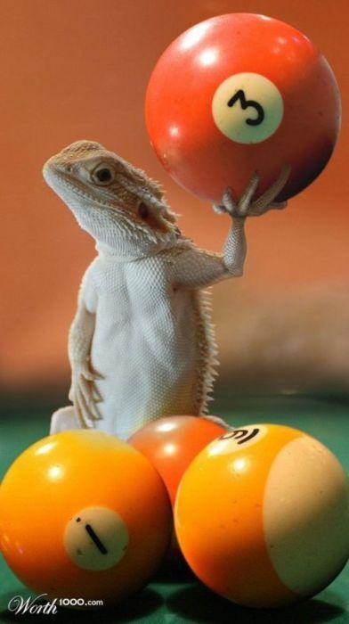 Забавні фото на тему: «Неможливе можливо» (33 фото)