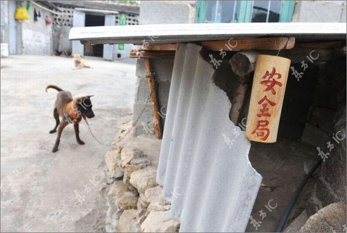 Бойові півні Китаю (20 фото)