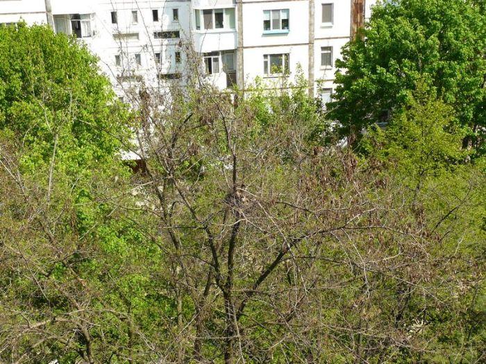 Цікавий сусід оселився у дворі (5 фото)