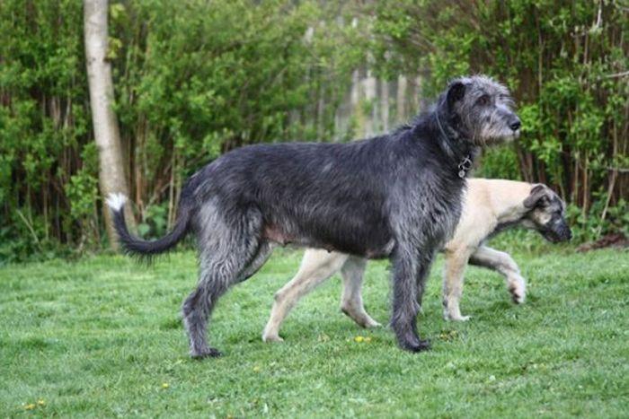 Цуценята та дорослі собаки (31 фото)
