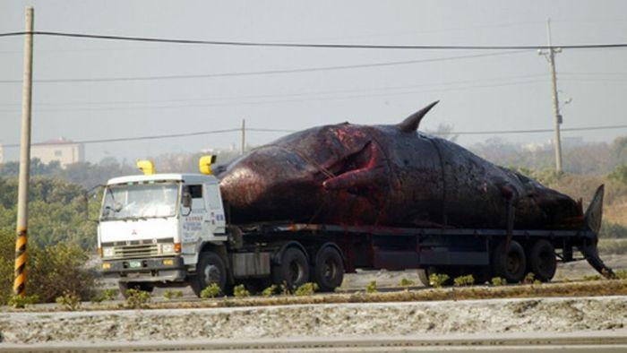 Вибух кита (9 фото)