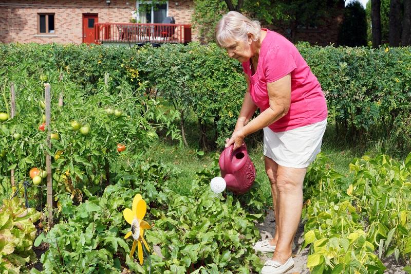 Тонкости выращивания домашних помидоров Вдохновение