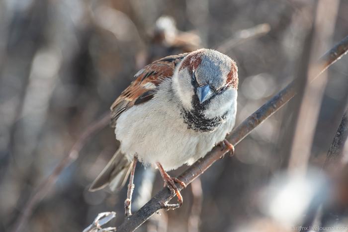 Птичий понедельник. Солдат любви природа
