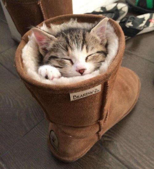 20 кошек, которые живут полной жизнью