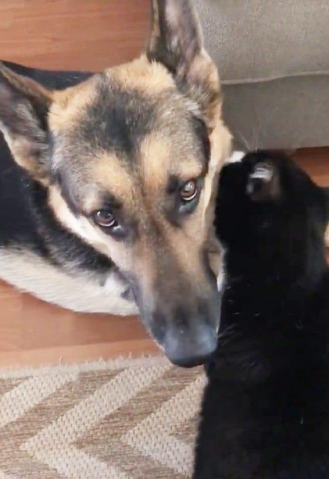 Кот-лекарь: почувствовав, что пес заболел, мурлыка стал о нем заботиться истории из жизни