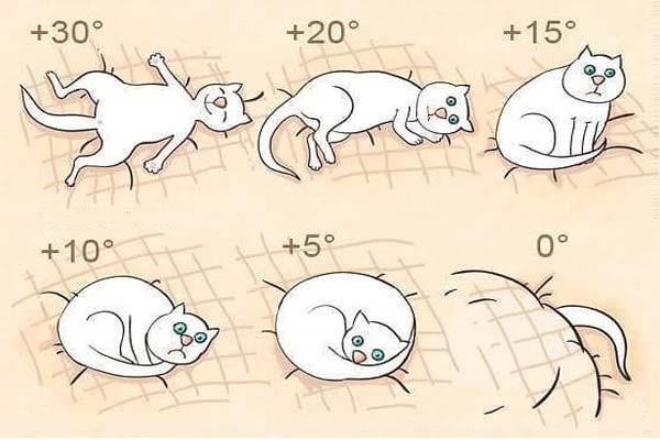 Коты и мистика. 7 интересных фактов о кошках загадки
